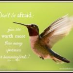 Learning From the Hummingbirds