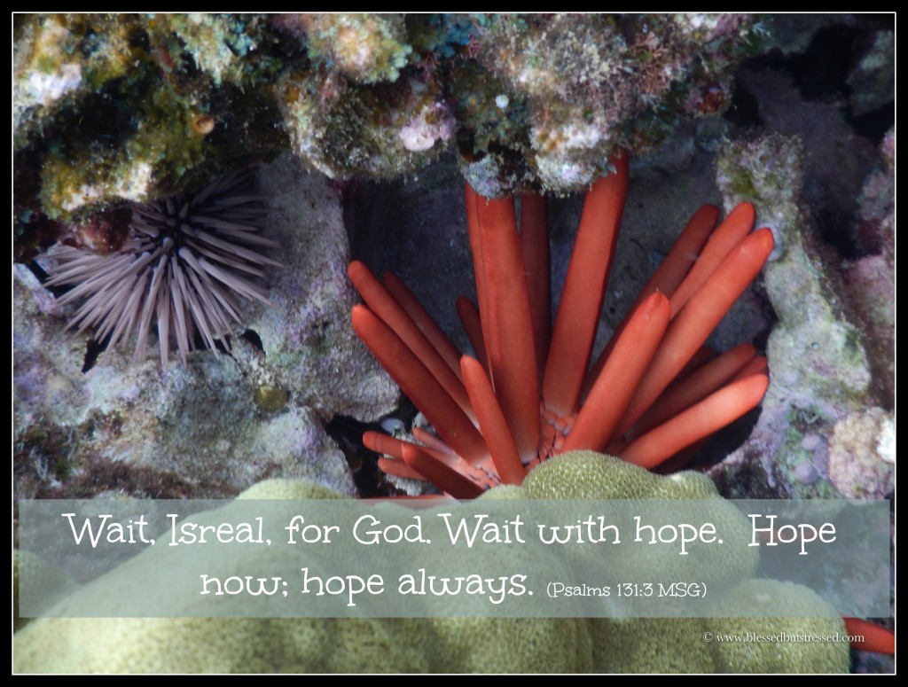 Waiting with hope.  It's not easy. http://wp.me/p2UZoK-vN via @blestbutstrest #caregiver